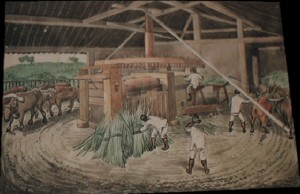 Florence_sugar_cane_mill